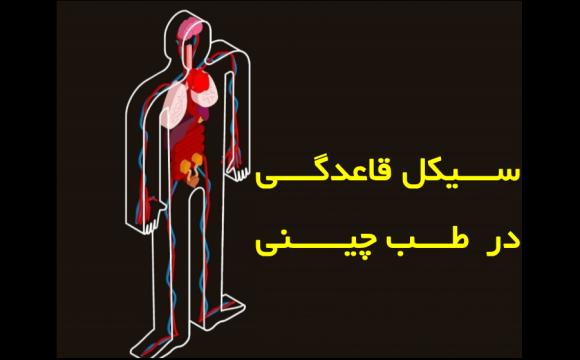 سیکل قاعدگی و اعضای بدن